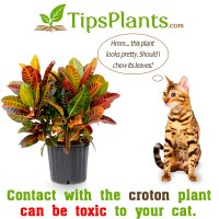 Photos Of House Plants Toxic To Cats