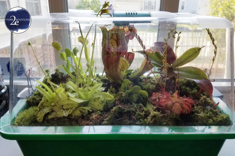 Carnivorous Plant Lesson Plan