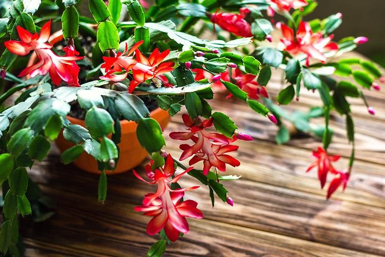 Top 10 Makkelijk te houden kamerplanten  tipsvoorjoucom