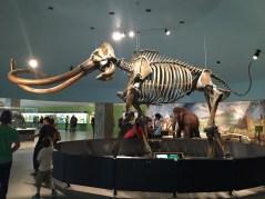 mammoth tipsypinup