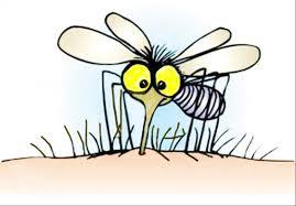 E5O mosquito