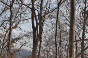 Bear Mountain - Twisted Tree