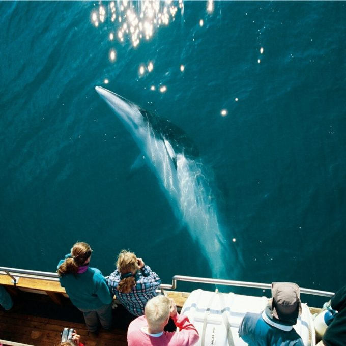 Silent whale watching is one of the best examples of responsible tourism and ethical wildlife tourism.