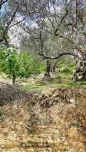 Mamica loop (Petrela-Shpat-Baldushk) (7)