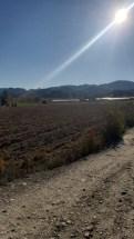Arbane-Budine-Zhullime-Paper trail (16)