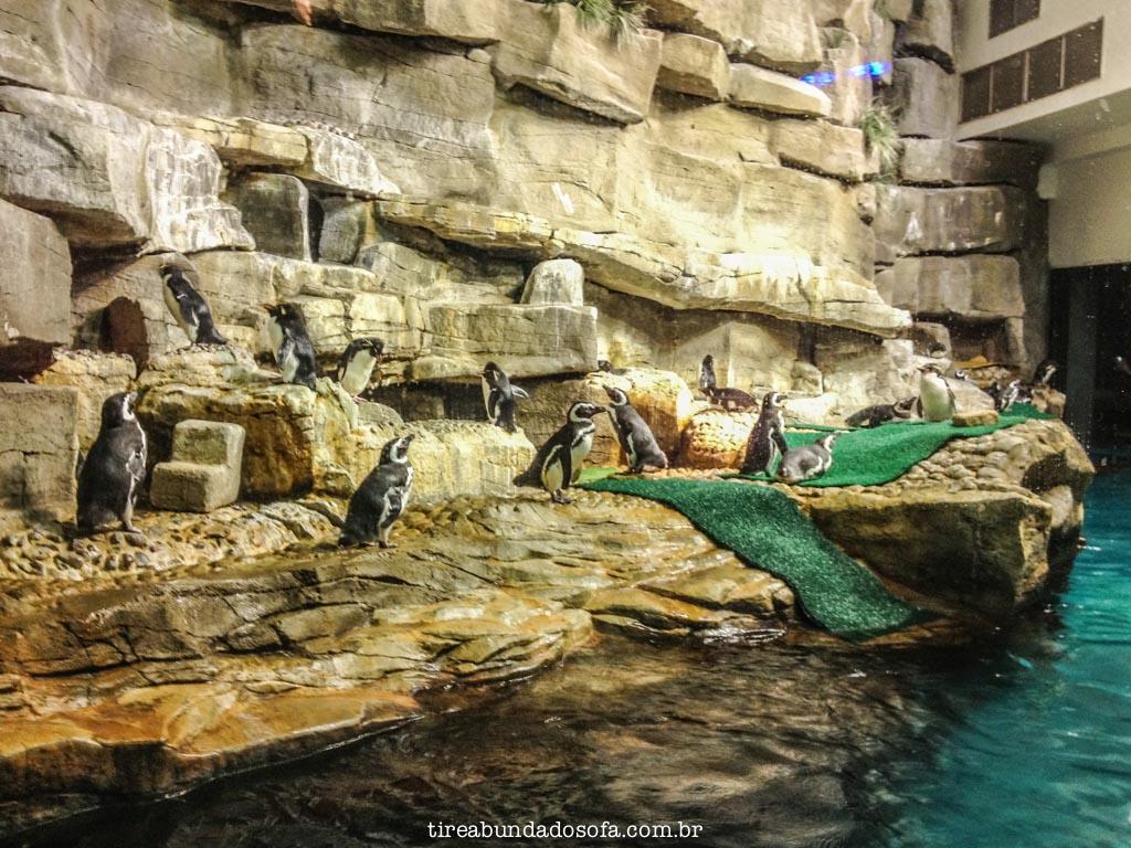 pinguins no shedd aquarium, em chicago
