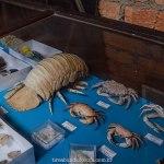 museu oceanográfico, museo marinho, bombinhas, mirante eco 360, santa catarina, praias de sc