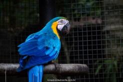 arara azul, parque das aves em foz do iguaçu