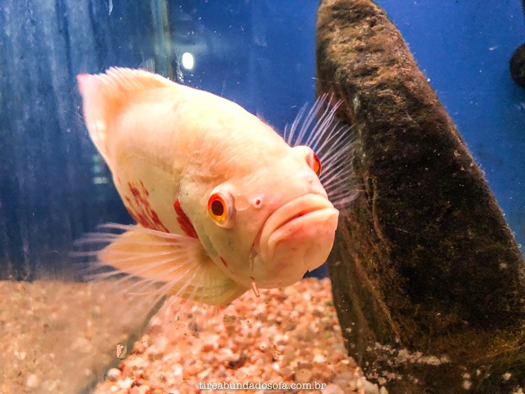 peixe no aquário de peruíbe sp