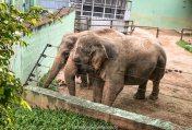 Elefantes resgatados, no Zoo Pomerode, SC