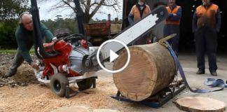V8 Powered Chainsaw 253 CI Holden Hardwood 4
