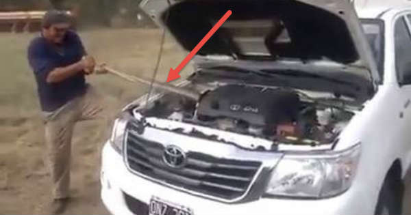 This Guy Found The Problem In This Car Massive Snake Under The Hood 1