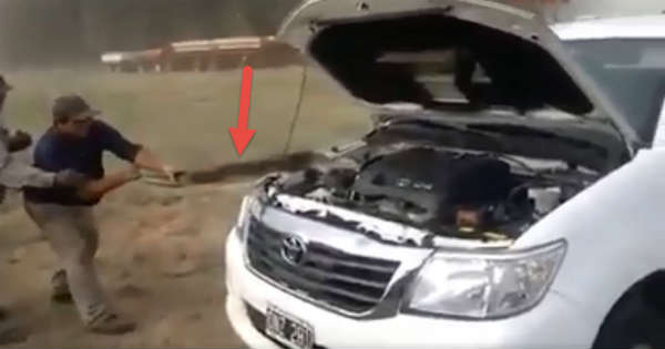 This Guy Found The Problem In This Car Massive Snake Under The Hood 11