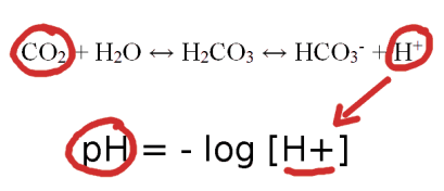 CO2 and pH relationship in the blood