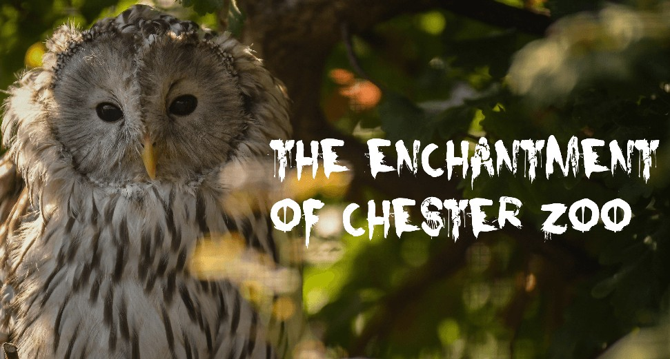The Enchantment of Chester Zoo – 22nd to 31st October