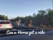 Horses Interstate 680