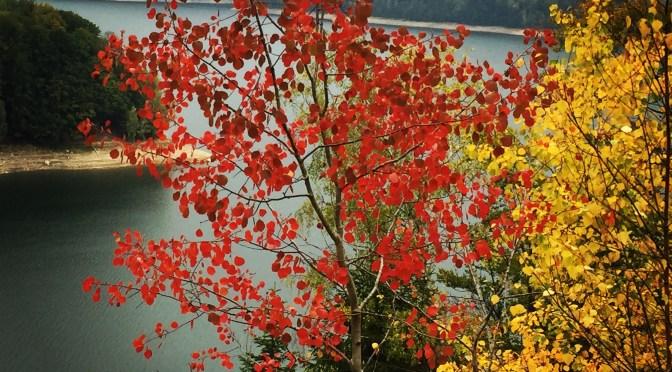 Peisaj de toamnă #autumn #leafs #redleafs