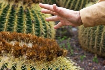 Una mano a punto de pincharse con las espinas de un cactus
