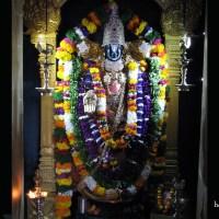 Sri Vari SEVA @ Tirumala Hills