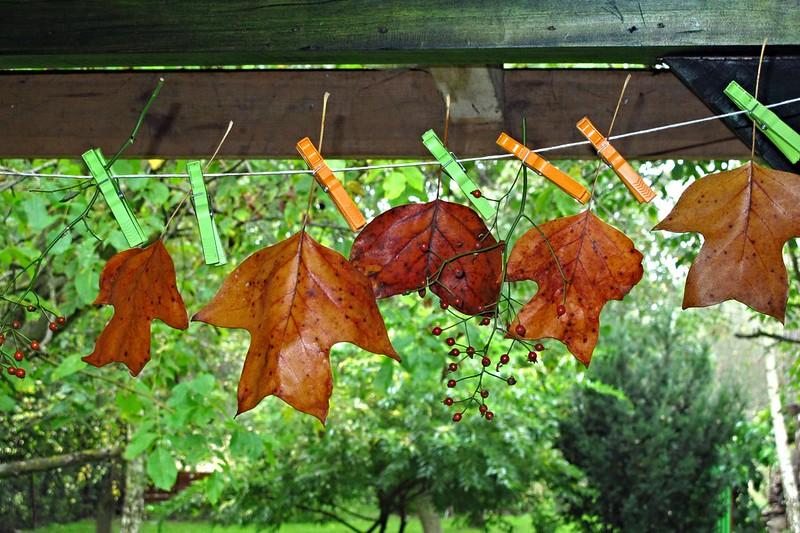 Transformation – Séchage de plantes médicinales