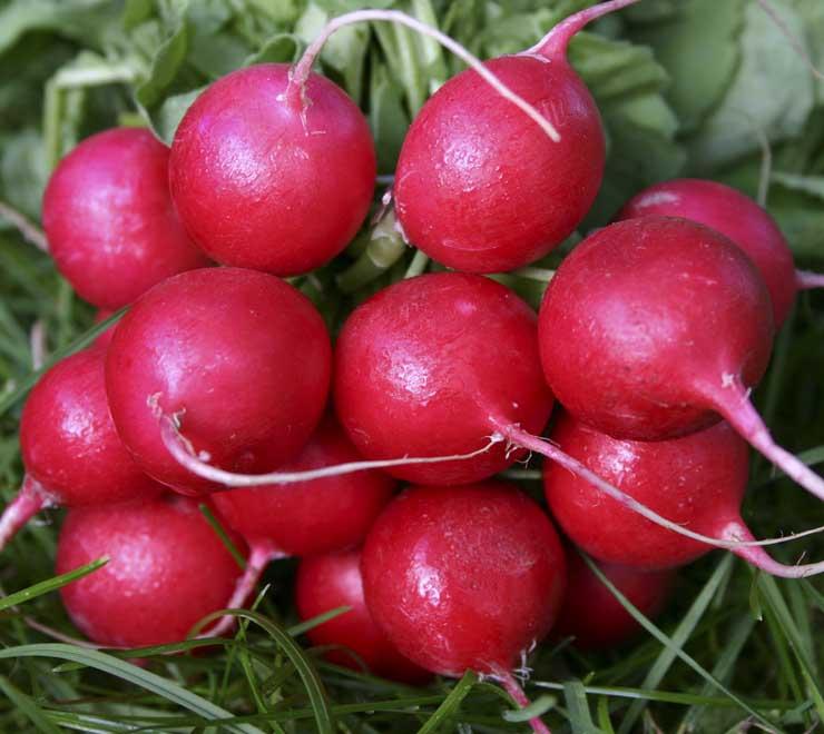 Cherry Belle radishes