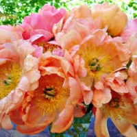 The Rules and Romance of Flowers