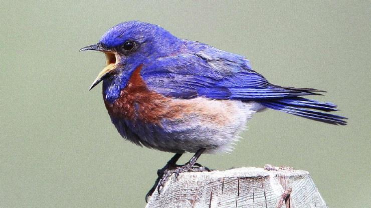Bird tweeting