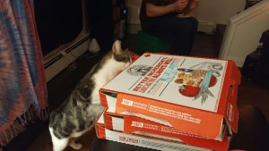 Cheerio the Cat wanted some pizza...or did he just want the boxes?