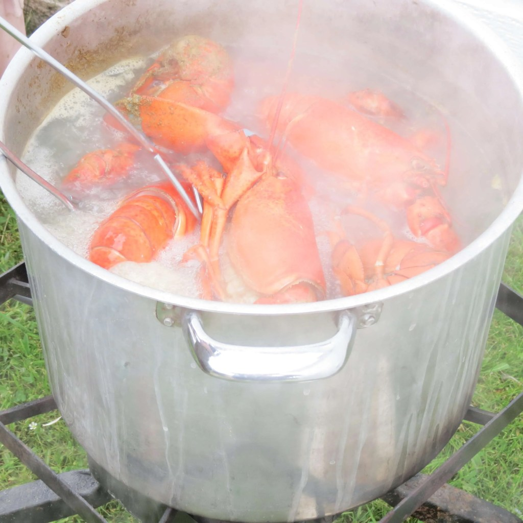 Lobsters cooking