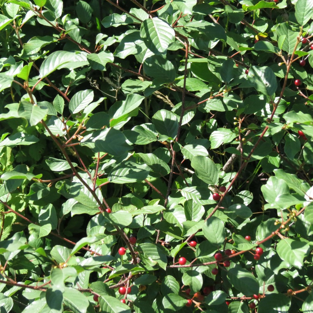 A bush with berries