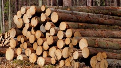 , Pulpwood and wood fuel prices in the US South