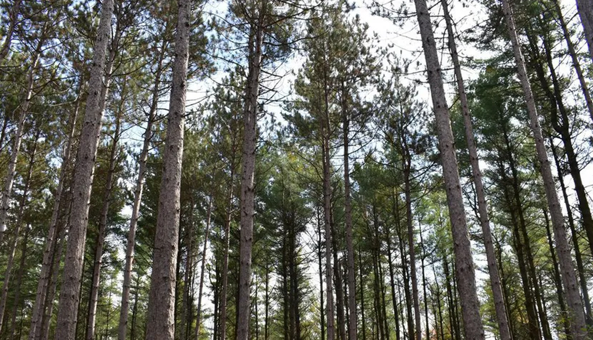 , South Nation Conservation focuses on forest management