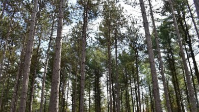 , South Nation Conservation focuses on forest management