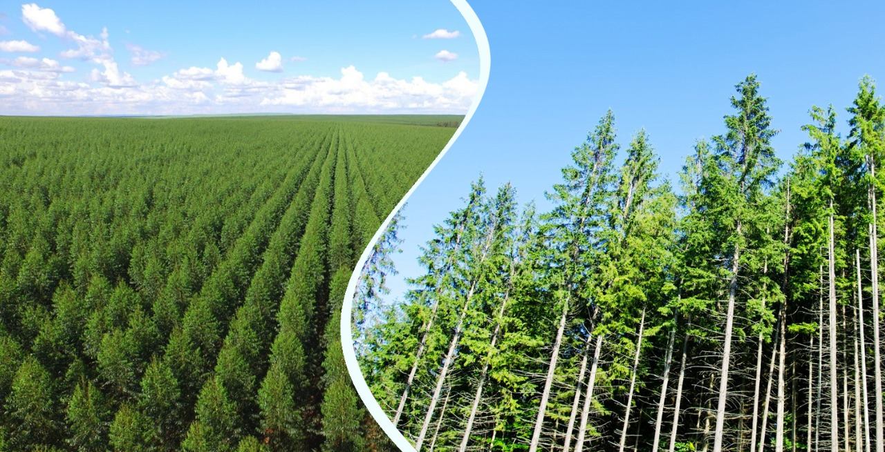 , World Environment Day: how the pulp and paper industry optimizes the use of natural resources