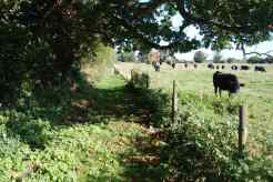 route-from-waterbeach-rd-to-barn-via-old-oak