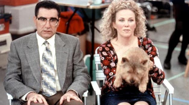 Levy, O'Hara & Winkie, the wonder Norwich Terrier
