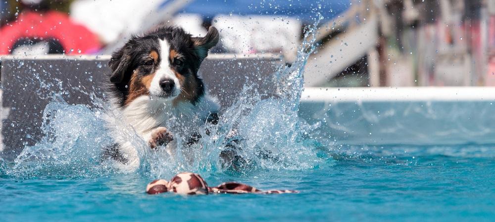 Dog swim day Saltdean Lido on Title Sussex Magazine www.titlesussex.co.uk
