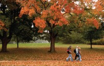 University of Guelph, Guelph, Ont Autumn on campus