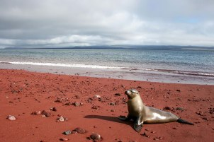 Red Sand Beach, Rabida, Galapagos. Image credits: Robert Peternel The red sand at Rabida was formed due to the oxidization of iron-rich lava deposits, although it could also be due to washed-up coral sediments.