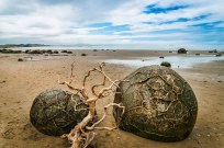 The Moeraki Boulders (Dragon Eggs) In Koekohe Beach, New Zealand. The boulders on this New Zealand beach are concretions – balls of sedimentary rock harder than the sedimentary earth that formed around them, which has long since washed away. These boulders get uncovered and smoothed by pounding waves. Image credits: Gerald Guerubin