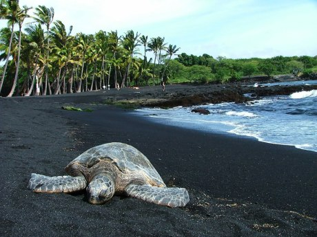 Punaluu Black Sand Beach, Hawaii . The black sand on Punaluu is formed by basalt lava, which explodes as it flows into the sea and rapidly cools. Image credits: hawaiitopten.com