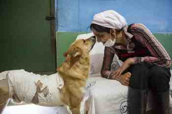 Rasht, Iran – May 2020. Two women were running in one of the parks in the city that witnessed this inhuman scene. This pretty cute dog has been harmed through physical violence with tar and acid attack by humans. Ms. Azadeh Mahjoub, 39 years old, examining a dog in her animal's rescue shelter. In 2012, she set up a shelter for injured animals (often dogs and cats) in the suburbs of the city of Rasht (Lakan shahr region) in North part of Iran. She is a graduate of accounting and has been an employee of a public university. Azadeh resigned from her job to protect animal rights and started a shelter by selling her wedding gifts (jewelries) alongside her husband's financial contribution. Currently, 150 dogs and 70 cats are kept in this shelter. The symptoms of these animals include abuse by previous owners, road accidents, digestive and mental health problems. This place is the only shelter in Iran that also keeps dogs with spinal cord injury. In this shelter, there are three female and one male contractor who are covering daily tasks but keeping them around is a hard job due to the hardship of the job and small amount of salary. For such high volume of work, this place needs more than 7 workers at the same time, and due to financial difficulties, they cannot pay their salaries and with only 4 workers, it is very hard to run such place. Iran is an Islamic country and dog is considered as an impure animal. Over time, when hardliners, became aware of the existence of this shelter, Azadeh repeatedly received threatened messages that the site to be set on fire by different individuals. Monthly expenses of this shelter exceed 30 million tomans ($2500) a month, which is usually managed with public donations. Unfortunately, with the outbreak of coronavirus and people's low income, the volume of public donations has greatly decreased, and the institute is struggling with many problems. This has also affected the workers and 2 of them have been re