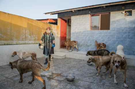Ms. Shahla, 60, is a retired Pars Khazar company employee. She has been working here for four years. Each morning after cleaning the rooms, female employees carries out the task of feeding animals. Dogs are obedient to the staff, and listen to them. (Photo Credit: Ali Sooteh / NVP Images)