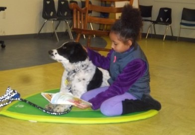 Read to Cash, a pet therapy dog