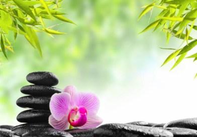 stones flower plants