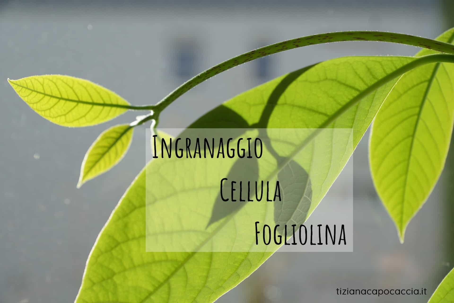 Ingranaggio Cellula Fogliolina