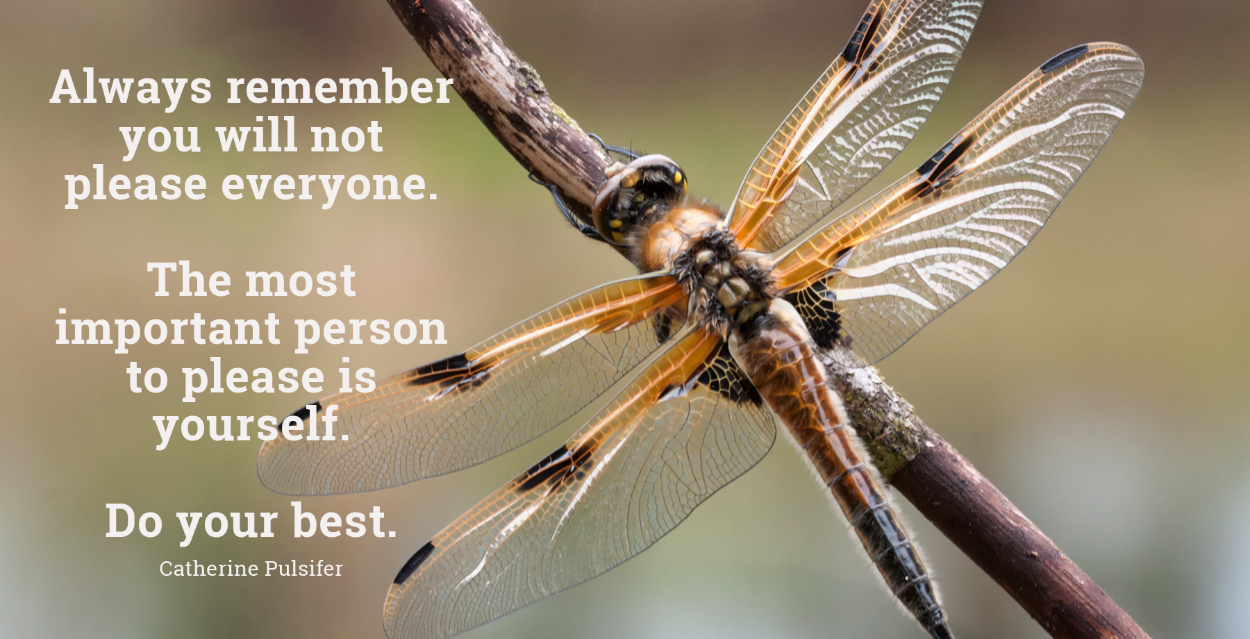 daily inspirational quote image: close up of an orange and back dragonfly on a branch