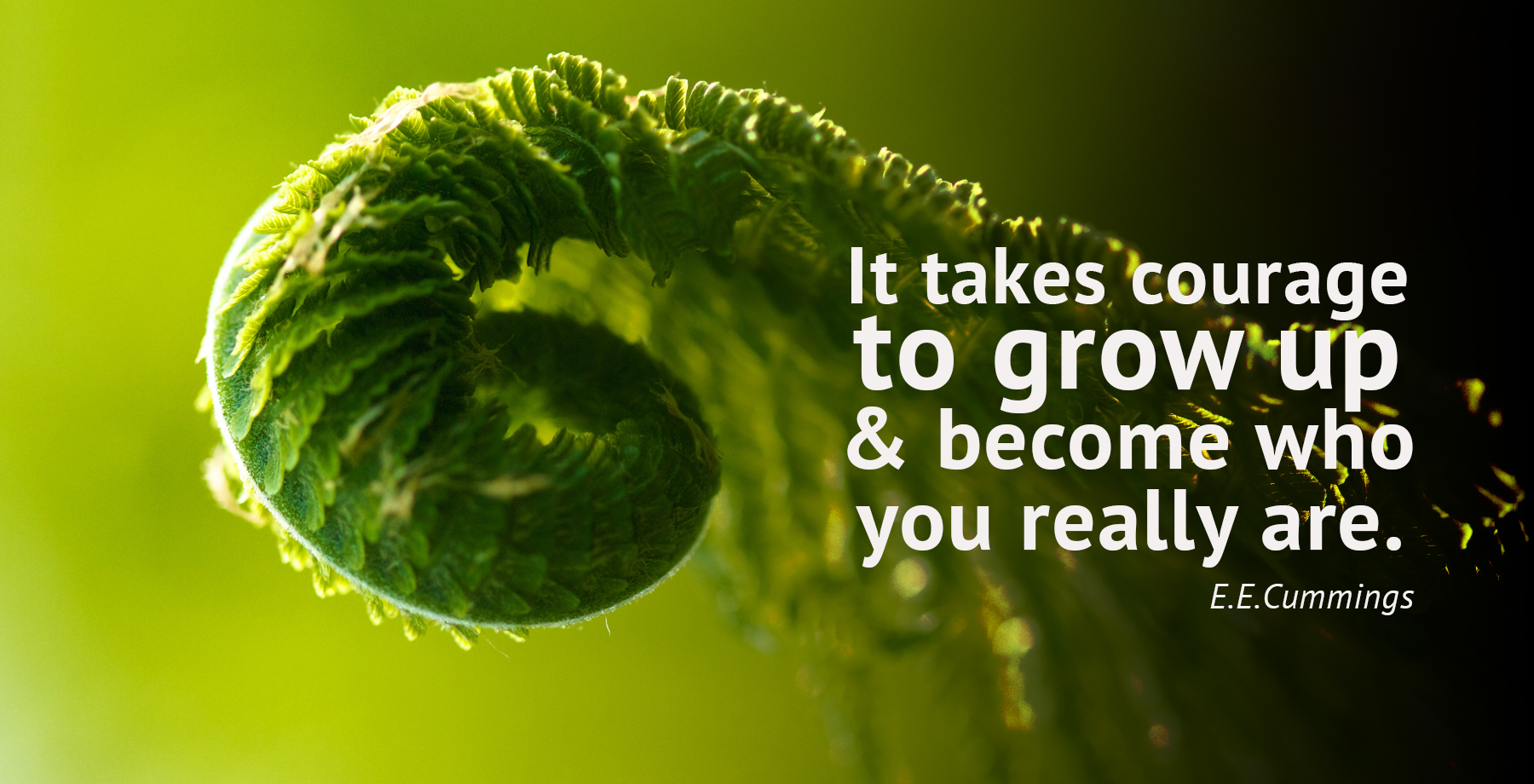daily inspirational quote image: a fern sprout slowly unrolling