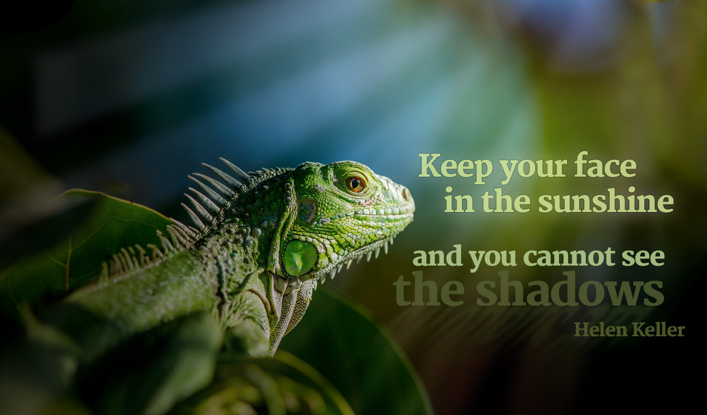 daily inspirational quote image: a green iguana up close, looking at the sun