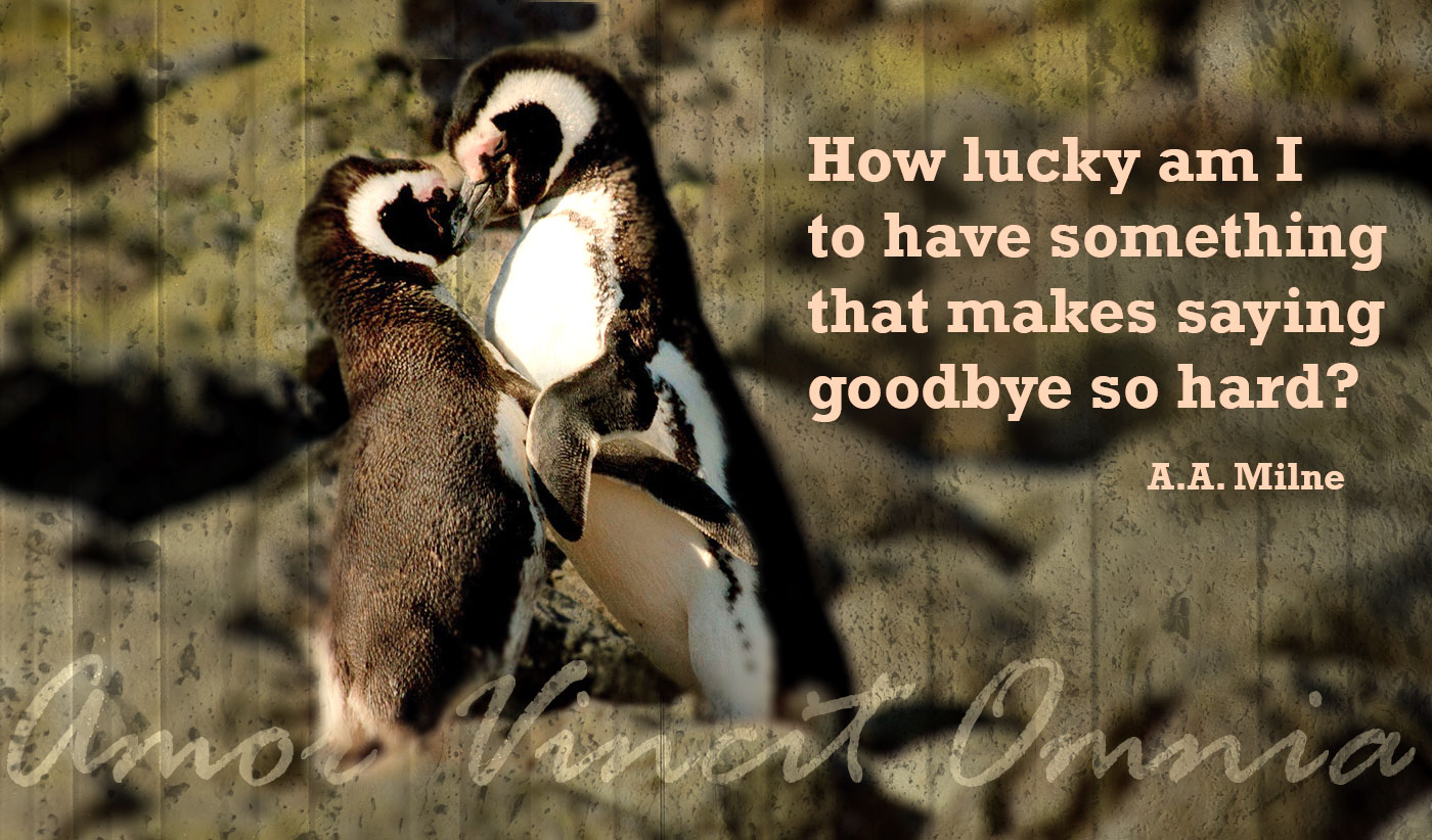 daily inspirational quote image: 2 fuzzy penguins kissing